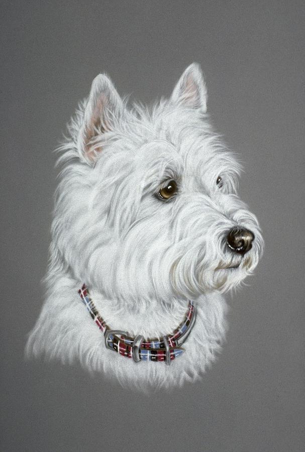 West Highland White Terrier  Pastel