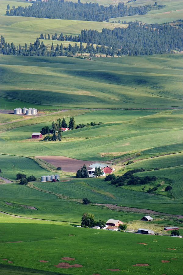 Wheatfields In Rural Washington State Photograph
