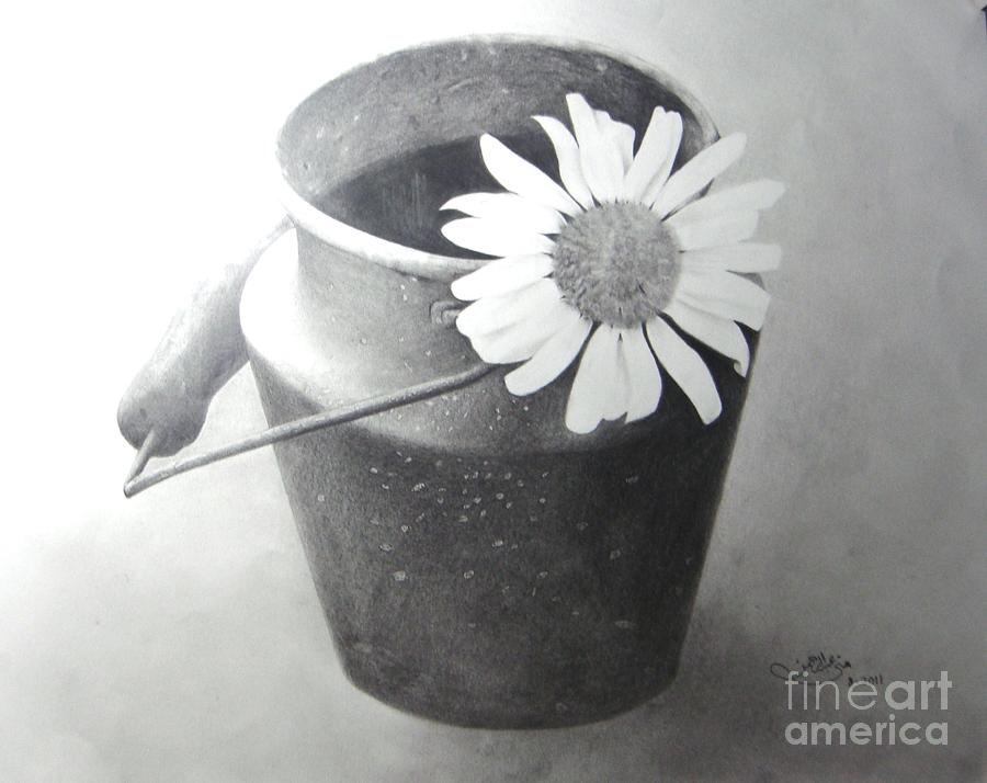 White Daisy Drawing  - White Daisy Fine Art Print