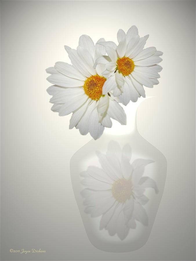 White On White Daisies Photograph