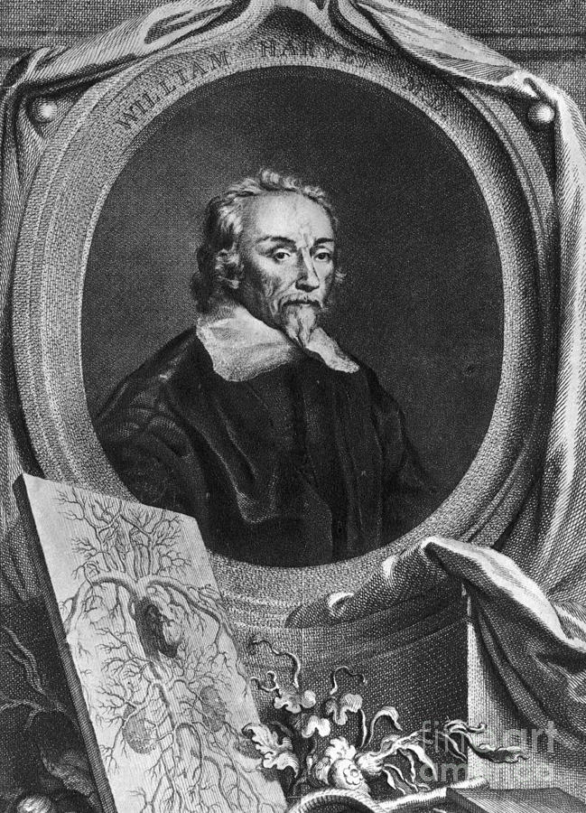 History Photograph - William Harvey, English Physician by Photo Researchers