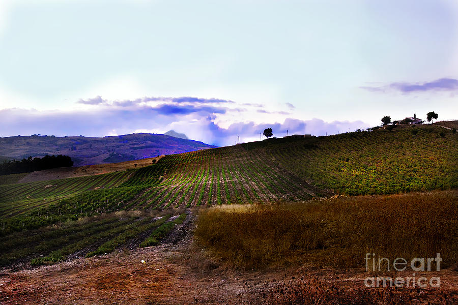 Land Photograph - Wine Vineyard In Sicily by Madeline Ellis