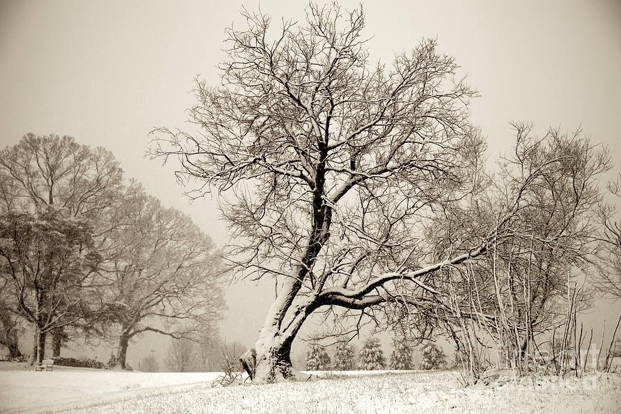 Winter Park Tree Photograph
