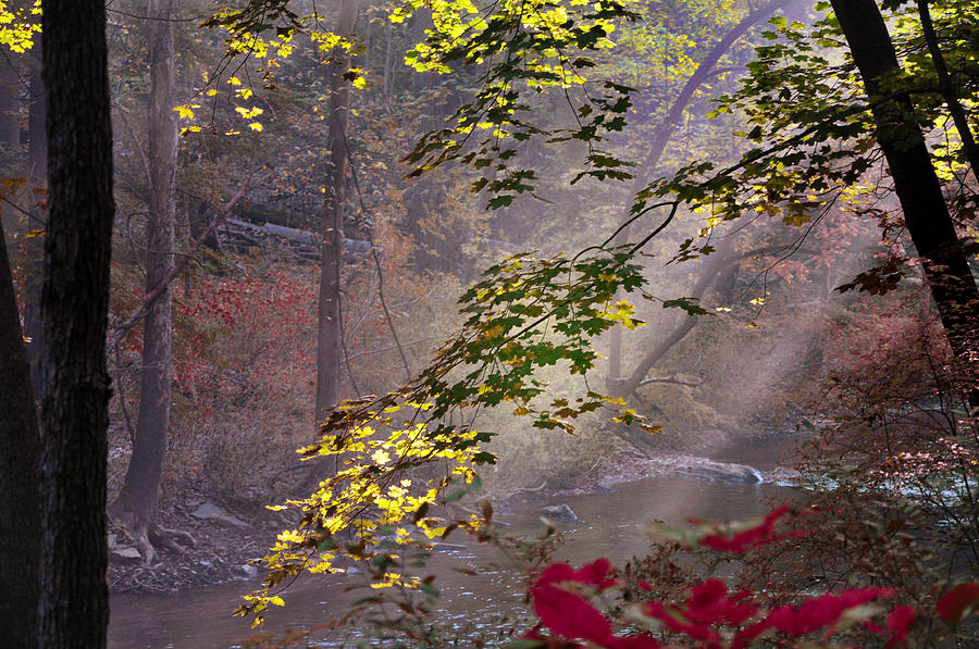 Wissahickon Autumn Photograph  - Wissahickon Autumn Fine Art Print