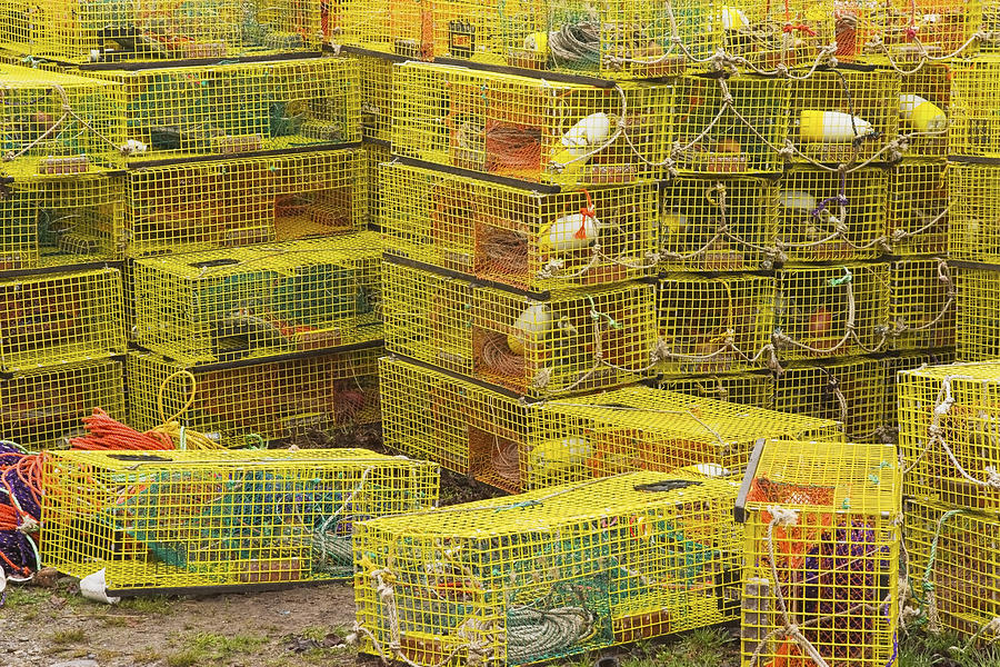 Lobster Trap Kits For Sale | Lobster House