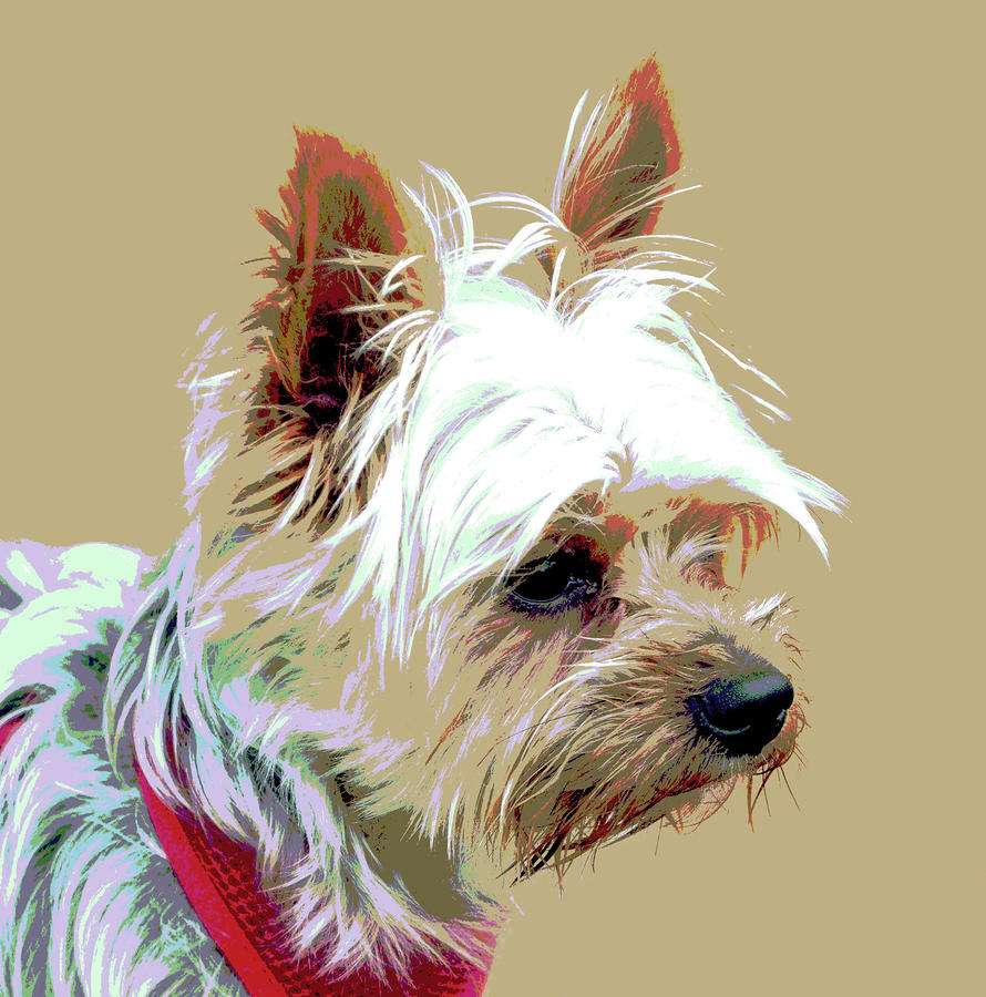 Yorkshire Terrier Digital Art  - Yorkshire Terrier Fine Art Print