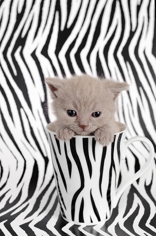 Cat Photograph - Zebra Cat by Waldek Dabrowski