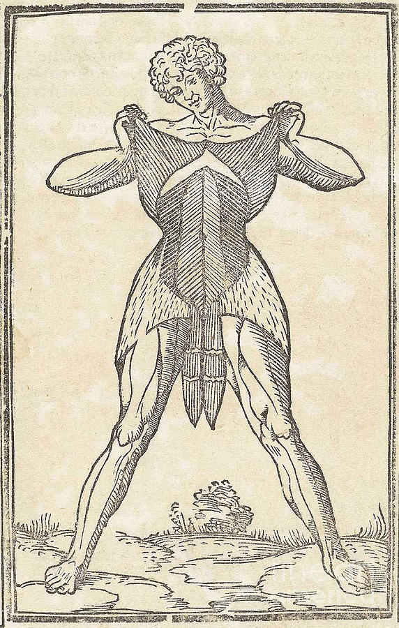 Historical Anatomical Illustration Photograph