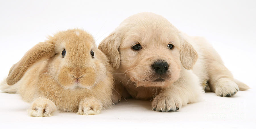 Rabbit And Puppy Photograph