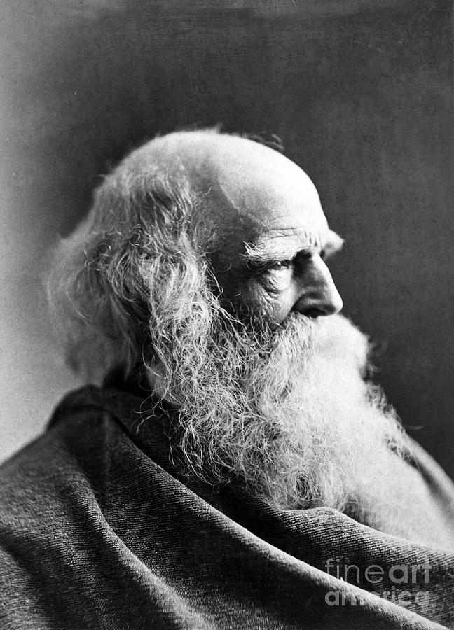 William Cullen Bryant Photograph  - William Cullen Bryant Fine Art Print