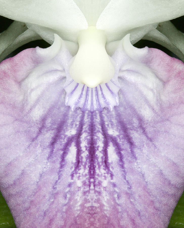 Orchid Flower Bloom Photograph