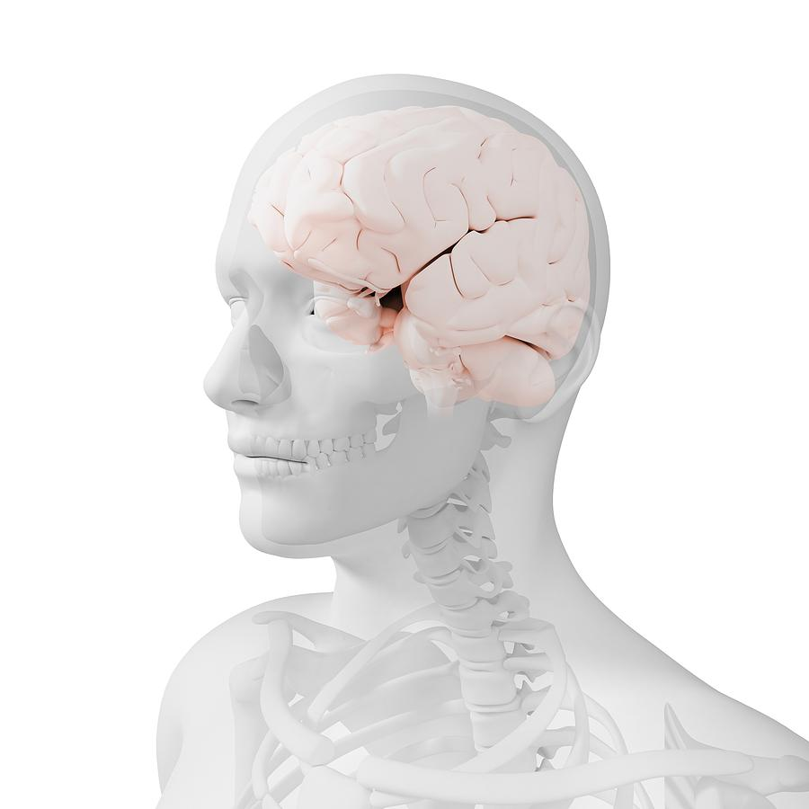 Head Anatomy, Artwork Photograph