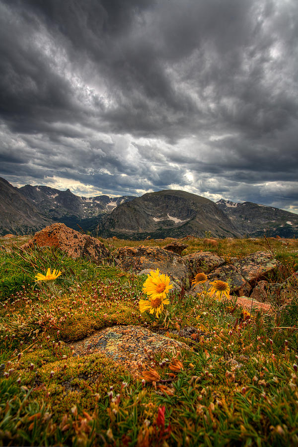 12000 Foot Flower Photograph  - 12000 Foot Flower Fine Art Print