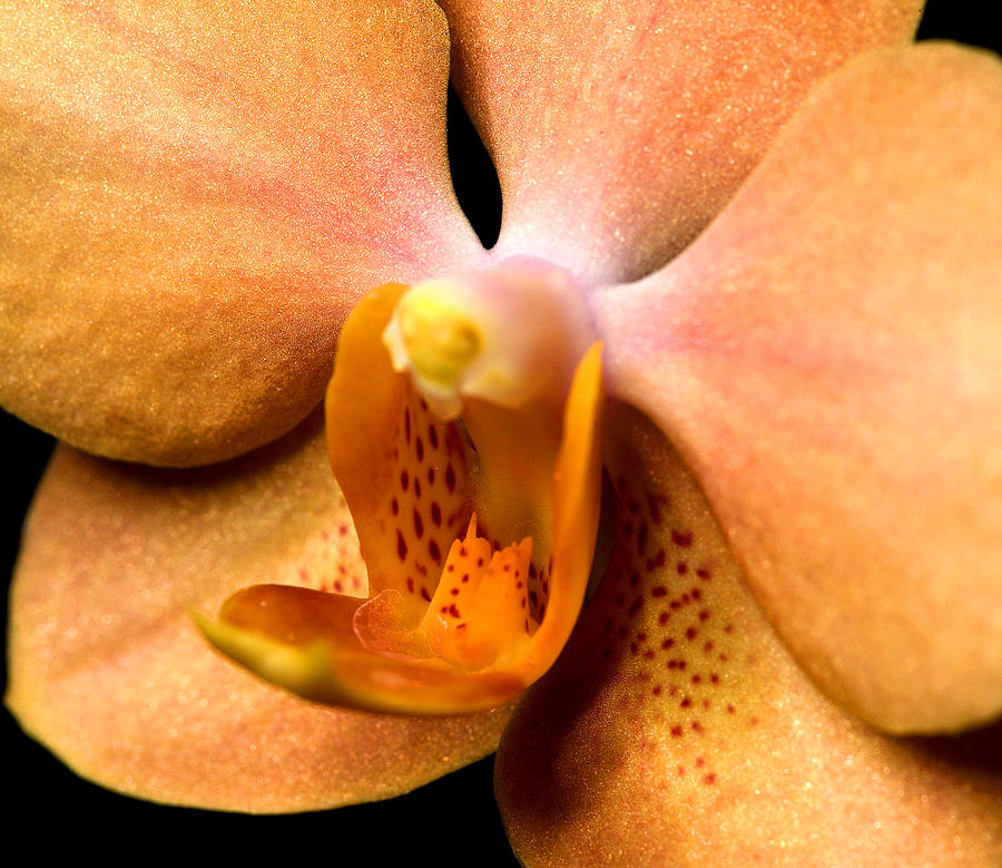 Exotic Orchids Of C Ribet Photograph  - Exotic Orchids Of C Ribet Fine Art Print