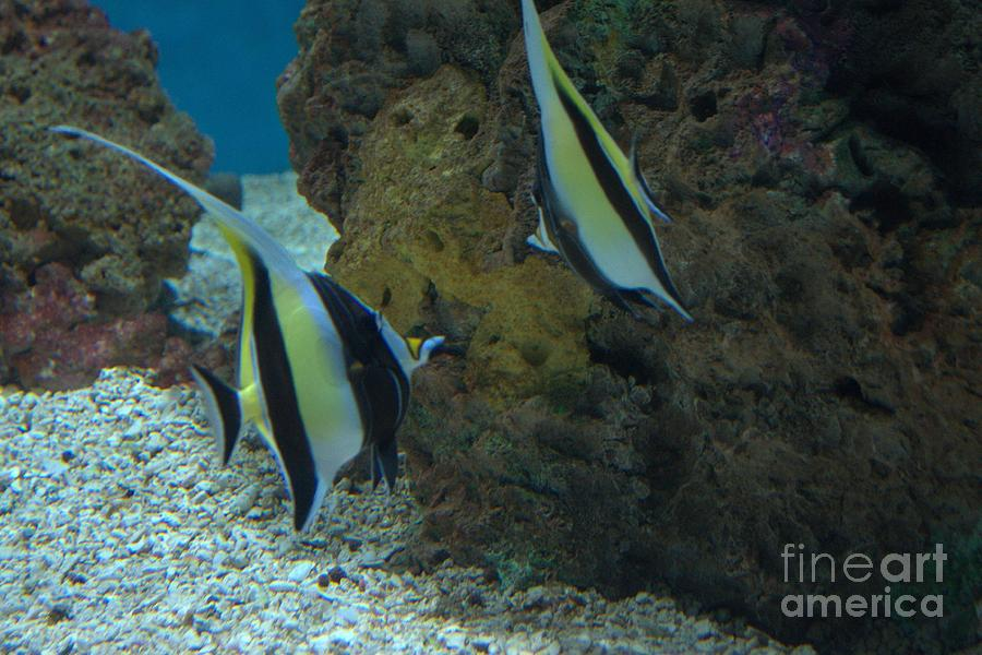 Fishes Photograph  - Fishes Fine Art Print