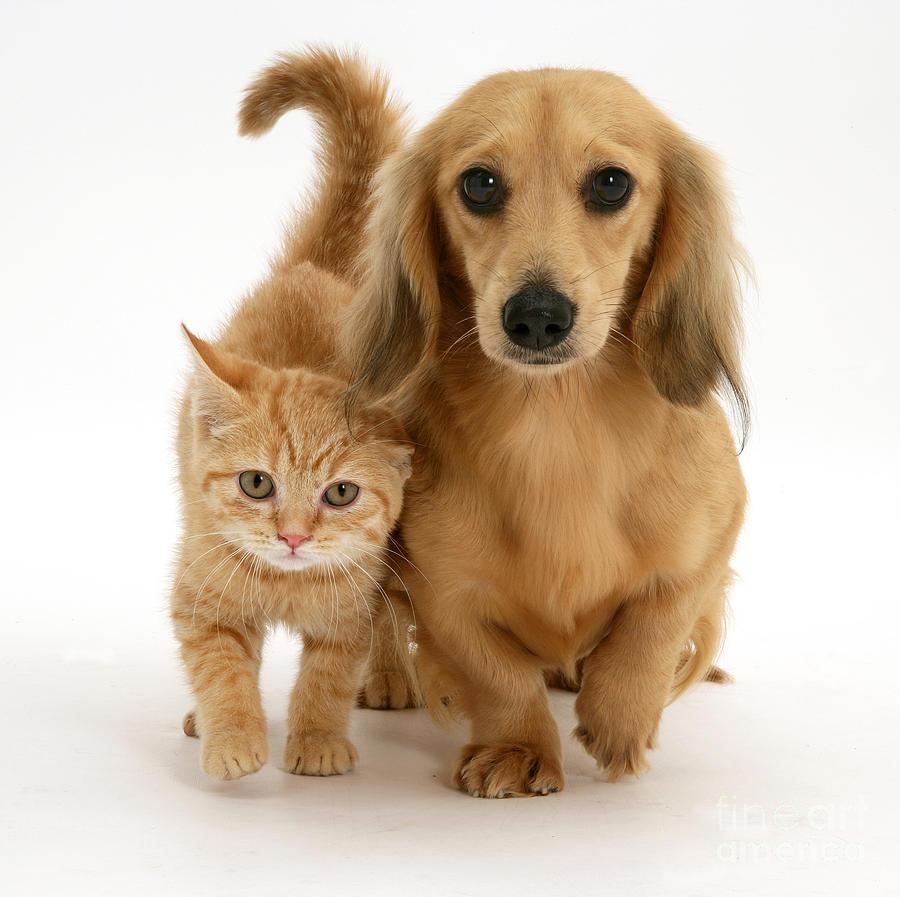Kitten And Puppy Photograph