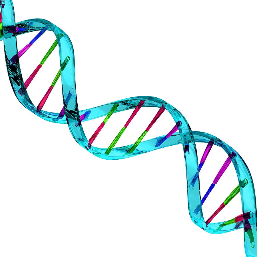 sam biology m1 dna Would the dna be the same in any cell in the human body since we were once one cell and grew to an organism by mitosis, all of the dna in our cells is identical 6.