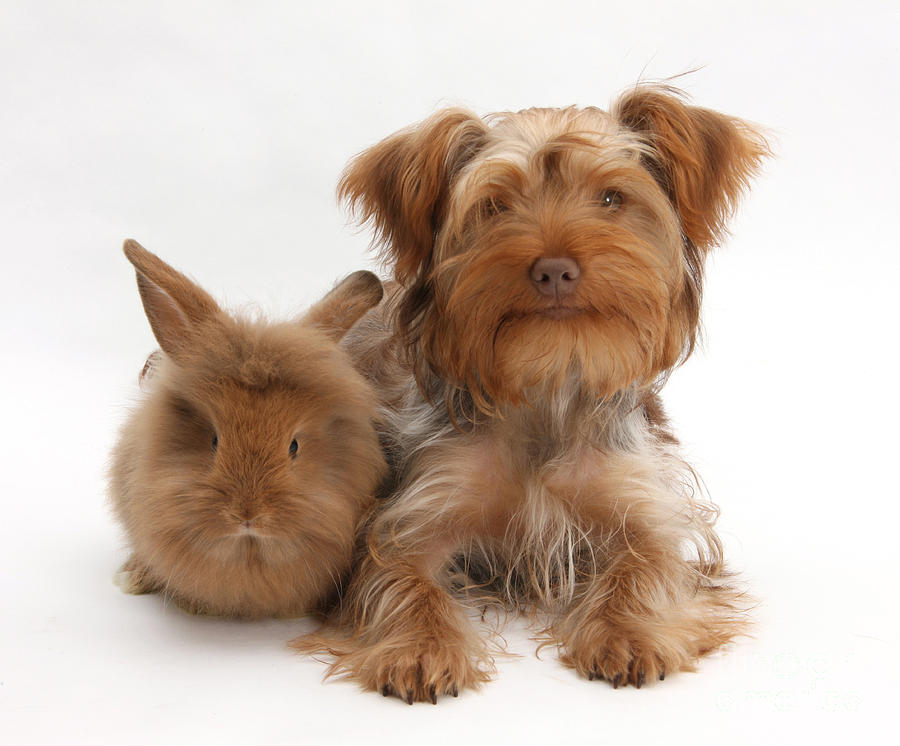 Puppy And Rabbit Photograph