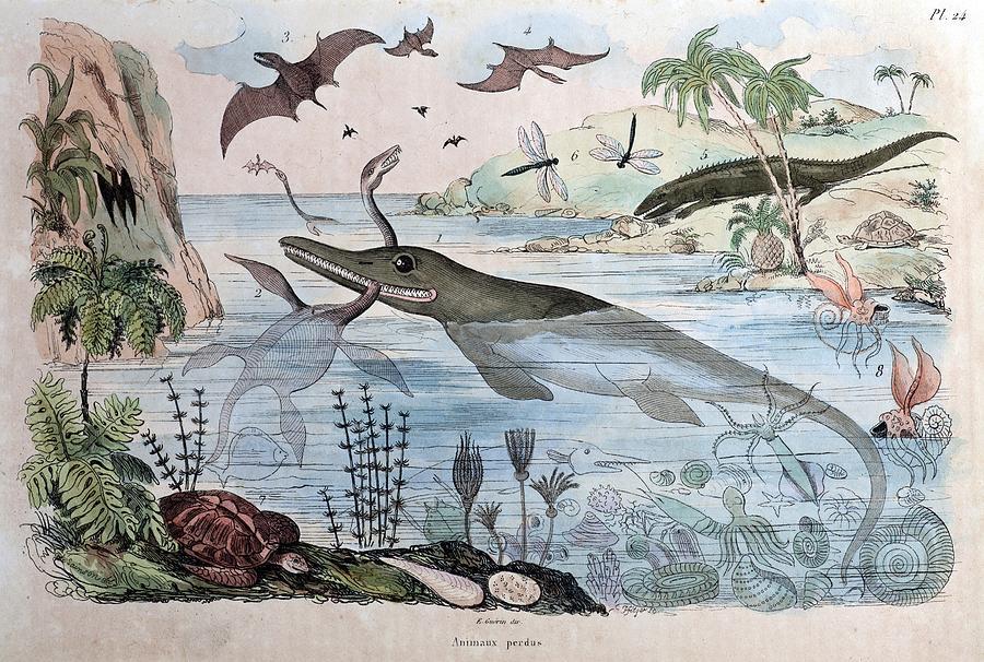 1834 Guerin Engraving extinct Animals Photograph
