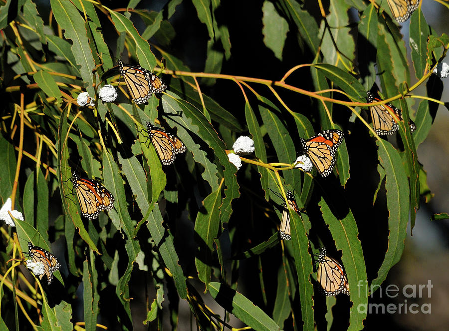 Butterflies Photograph - Butterflies by Marc Bittan