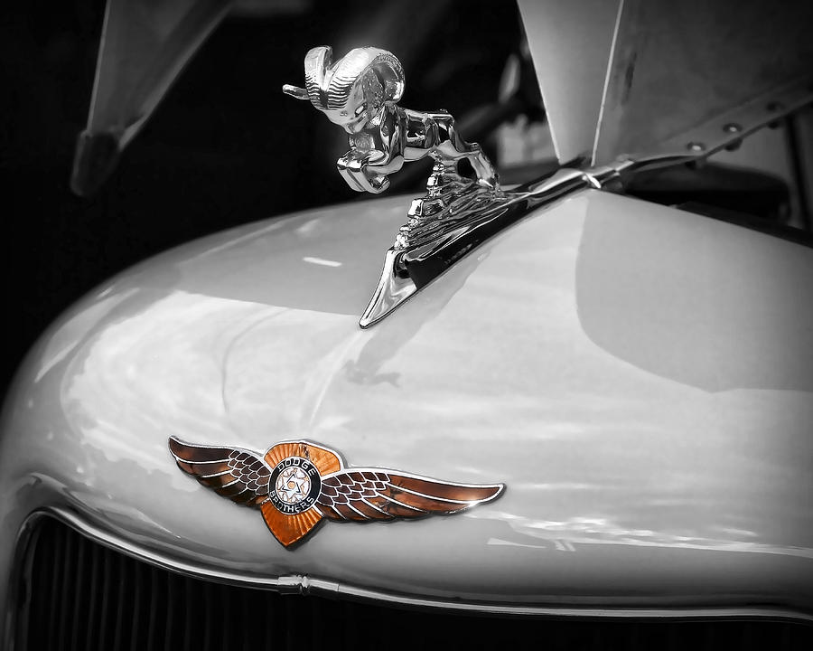 1935 Dodge Brothers Pickup - Ram Hood Ornament Photograph  - 1935 Dodge Brothers Pickup - Ram Hood Ornament Fine Art Print