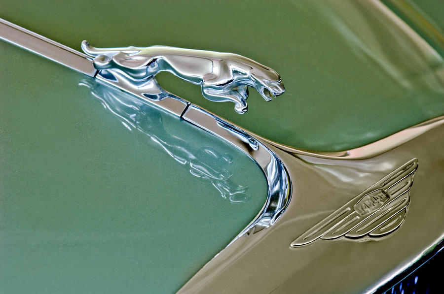 1966 Jaguar Hood Ornament Photograph