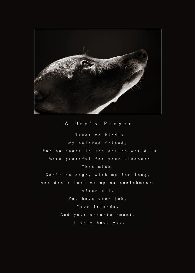 A Dogs Prayer Photograph  - A Dogs Prayer Fine Art Print