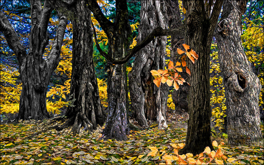 Autumn Landscape Photograph  - Autumn Landscape Fine Art Print