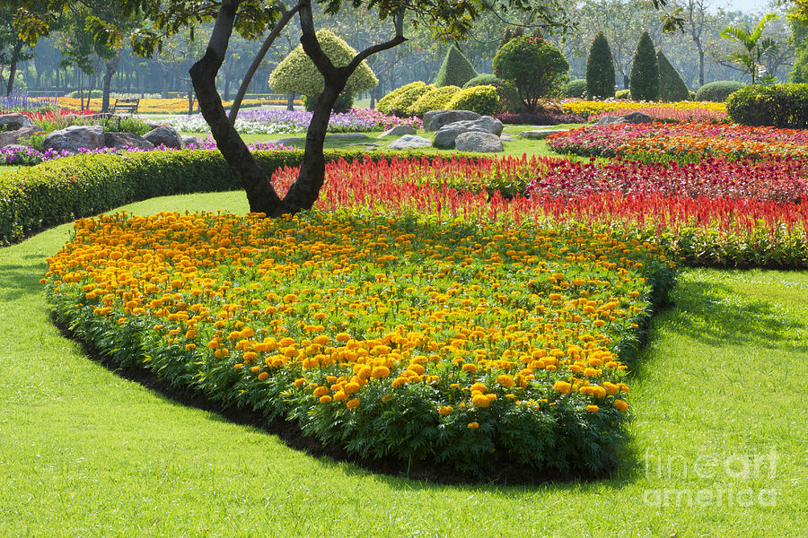 Beautiful Flowers In Park Photograph