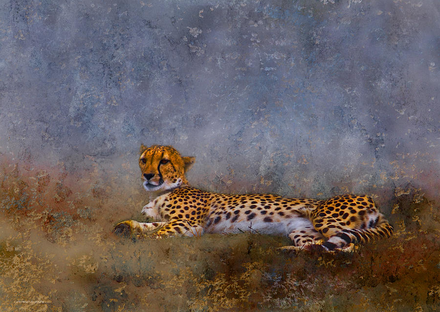 Cheetah Digital Art  - Cheetah Fine Art Print