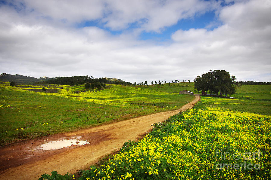 Countryside Landscape Photograph