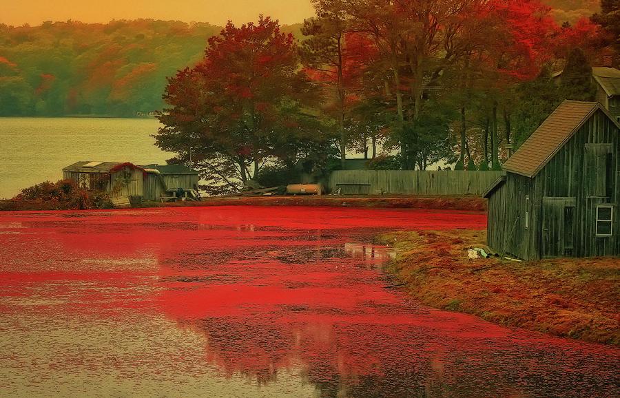 Cranberry Farm Photograph