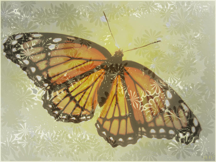 Designer Butterfly Collection Photograph