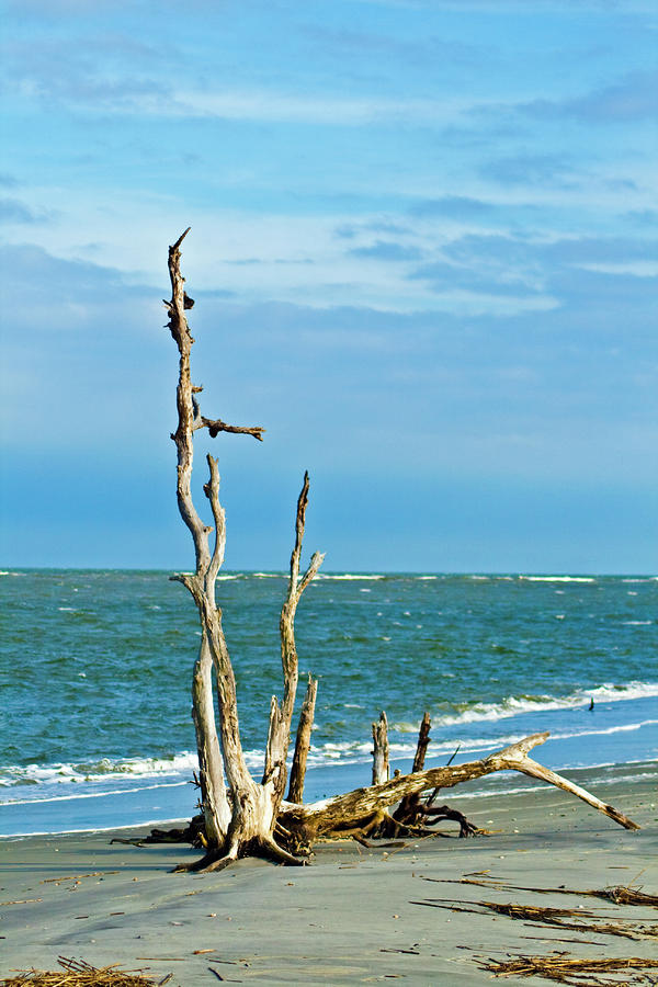 Driftwood On Beach Photograph