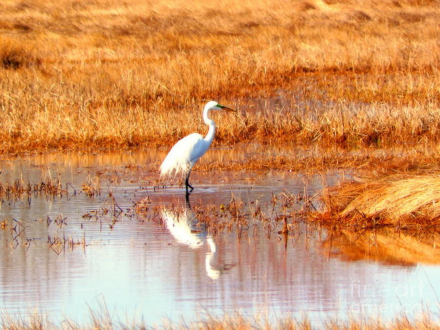 Egret Photograph 