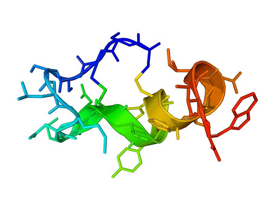 Endothelin-1 Photograph - Endothelin-1 Molecule by Laguna Design