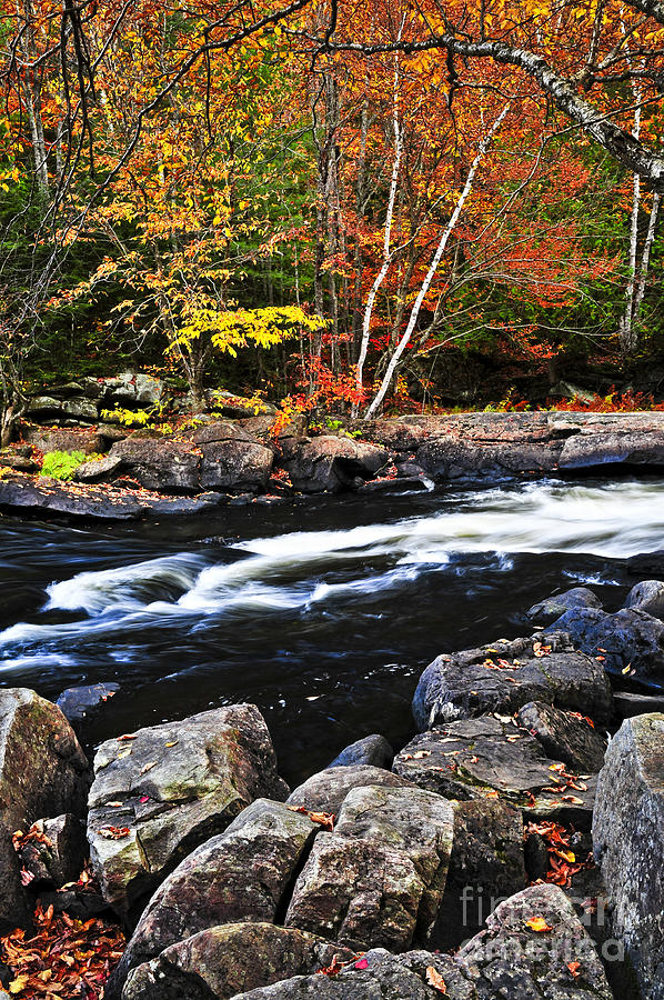 Fall Forest And River Landscape Photograph