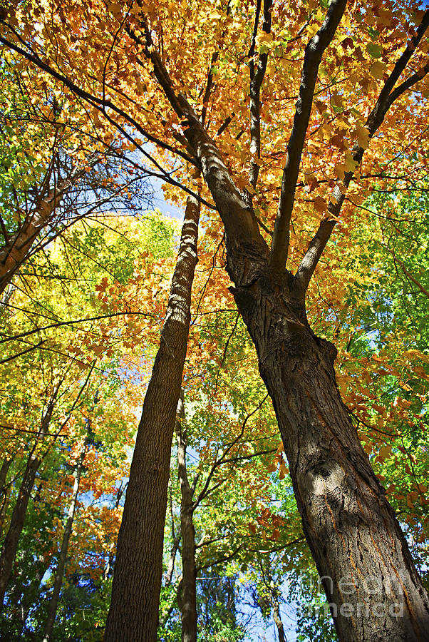 Fall Forest Photograph