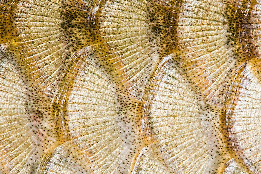 Fish Scales Background Digital Art