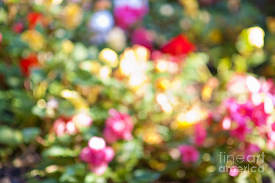 Flower Garden In Sunshine Photograph  - Flower Garden In Sunshine Fine Art Print