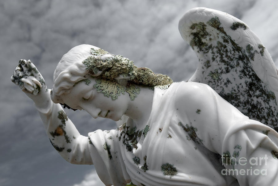 Grieving Angel Sculpture  - Grieving Angel Fine Art Print