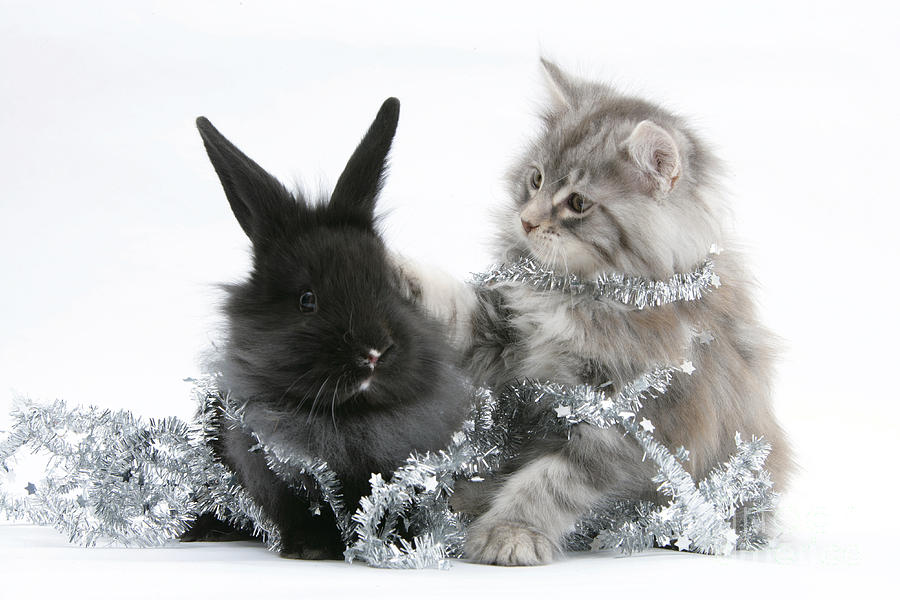 Kitten And Rabbit Getting Into Tinsel Photograph  - Kitten And Rabbit Getting Into Tinsel Fine Art Print