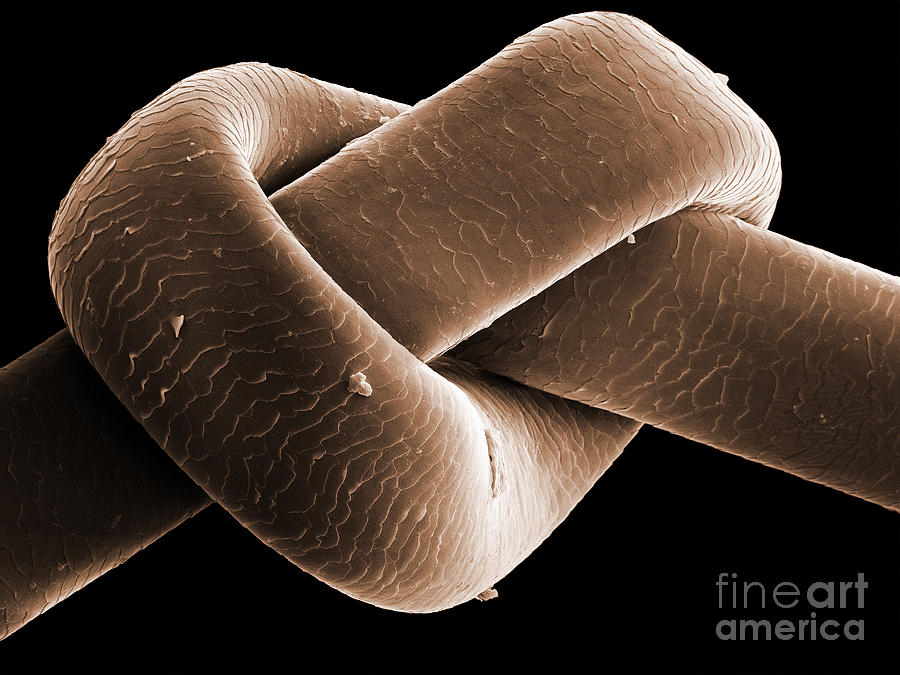 Knot In Human Hair, Sem Photograph