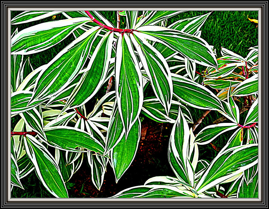 Leaves Photograph  - Leaves Fine Art Print