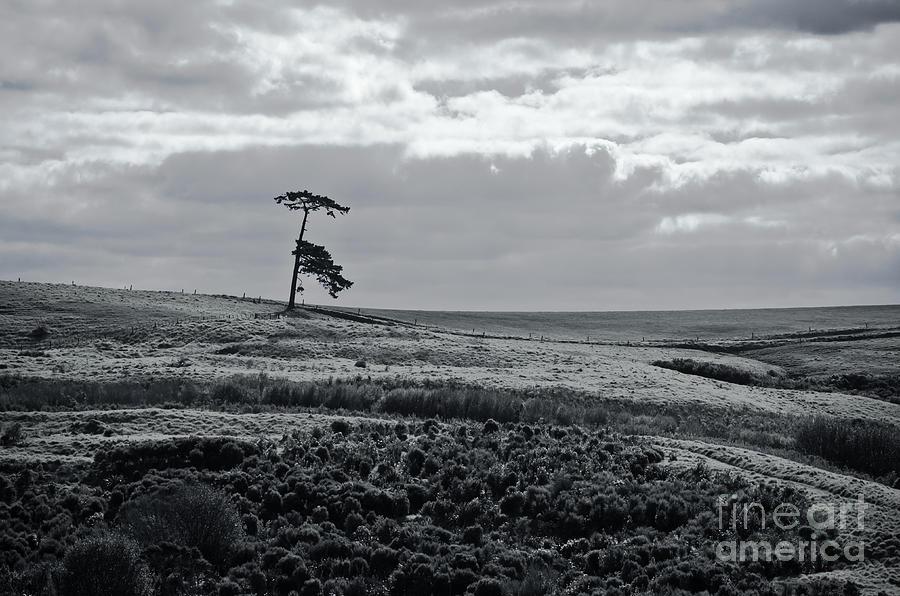 Lone tree vancouver