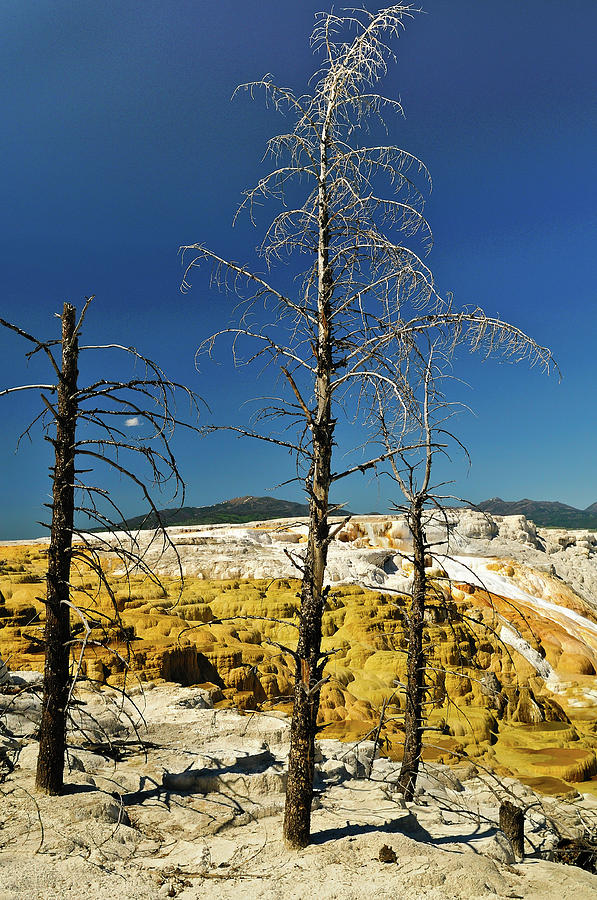 Mammoth Hot Springs Photograph - Mammoth Upper Terrace by Greg Norrell