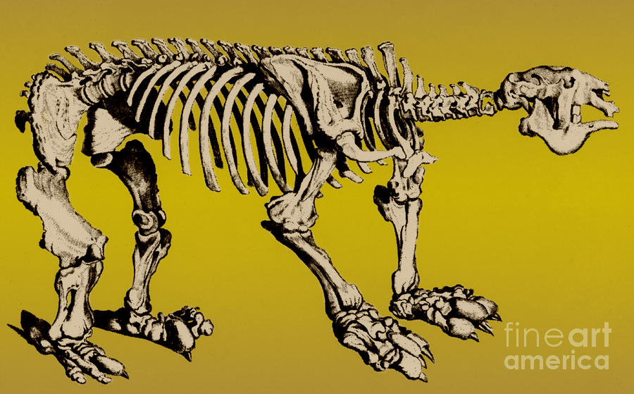 Megatherium, Extinct Ground Sloth Photograph