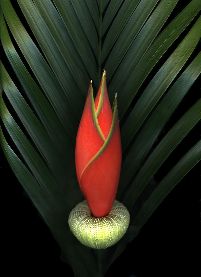 Palm Of Fire Photograph  - Palm Of Fire Fine Art Print