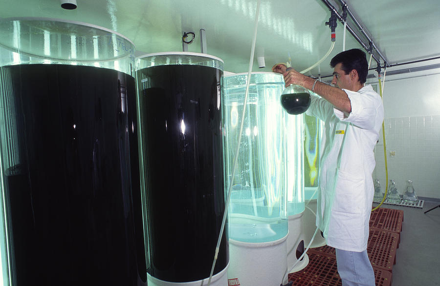 Plankton Research Photograph