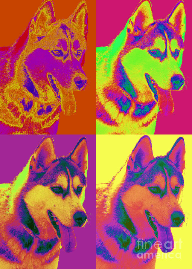 Pop Art Siberian Husky Digital Art  - Pop Art Siberian Husky Fine Art Print